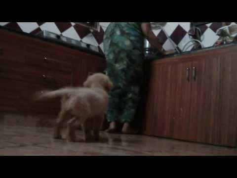 Lambo video 04012014