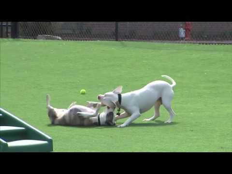 Rescue Rundown Episode 49: Dog Park Safety