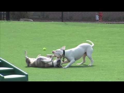 Rescue Rundown Episode 49: Dog Park Safety