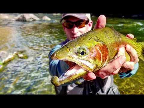 DIY Utah's Green River! Fly Fishing 4 BIG TROUT! Spring.