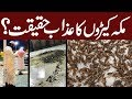 makkah cockroaches   black grasshoppers swarm saudi arabia for the first time in history