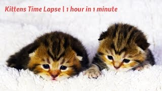 Kittens Time Lapse | 1 hour in 1 minute