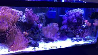 Морской аквариум, уход, оборудование и удачные покупки.