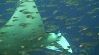 Science O.C.N. -  Deep Water Ocean Lounge - Drifting Through Centuries