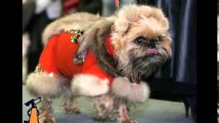 Одежда для маленьких собак. Мода среди собак или как одеть собаку