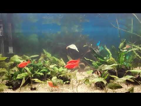 Географический аквариум Южной и Юго-Восточной Азии