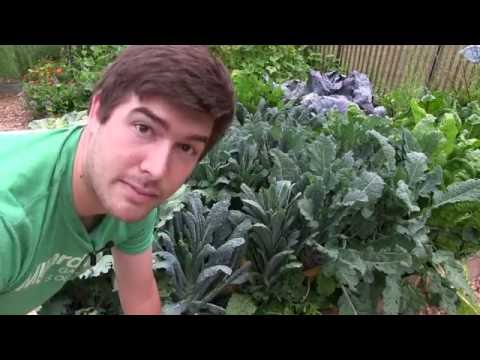 Get Rid of Pest Caterpillars In The Garden Once And For All!