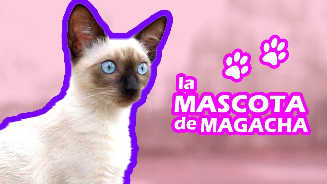 La mascota de Magacha