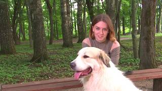 Пиренейская горная собака.