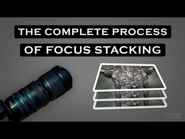 The Complete Process Of Focus Stacking Macro BTS - Part 2 | Focus Stacking & Macro Photography