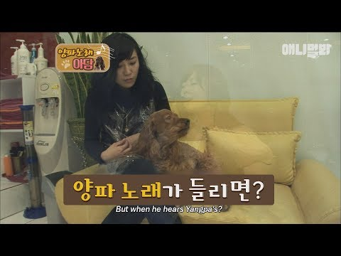 Adam the dog's fanatic about a Korean singer?!