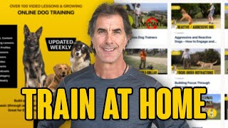 Online Dog Training  Train Your Dog at Home
