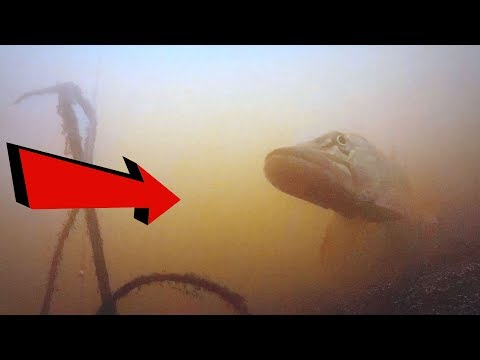 Молниеносная АТАКА ЩУКИ на живца!!!Подводная съемка