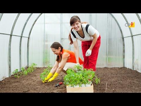 Curso a Distância Cultivo Orgânico de Hortaliças em Estufa CPT