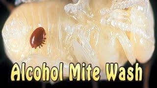 Alcohol Mite Wash (Varroa Mite Count)