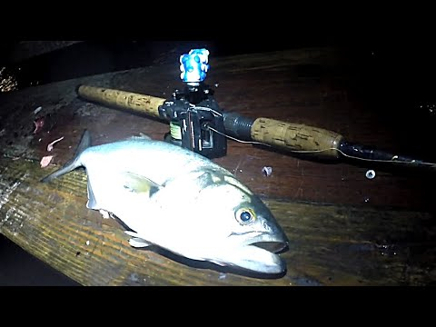 STRIPED BASS – Windy Night POP IN PIER Fishing Action – BLUEFISH