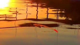 Душевная рыбалка .Рыбы так много, клюёт на каждом забросе. Природа, закидушки, лодка, рыбка