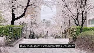 연숙씨의 아파트 벚…
