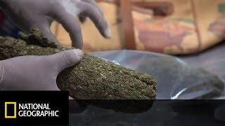 Student miał przy sobie ponad sto gram marihuany! [Alarm na lotnisku]