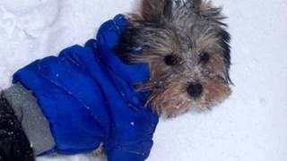 где купить одежду для собак в ульяновске