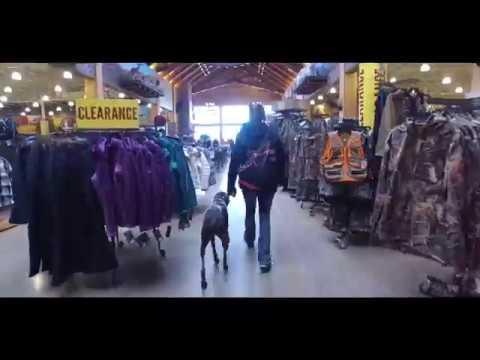 Best Dog Training in Columbus, Ohio! 6 Year Old German Shorthaired Pointer, Watson!