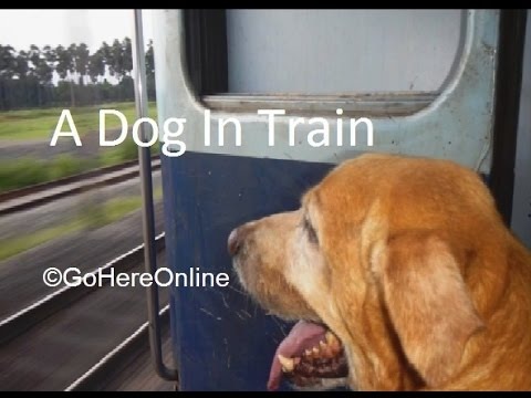 A Dog Carried in the Train | Indian Railway | Rules to Carry Pets in Trains????