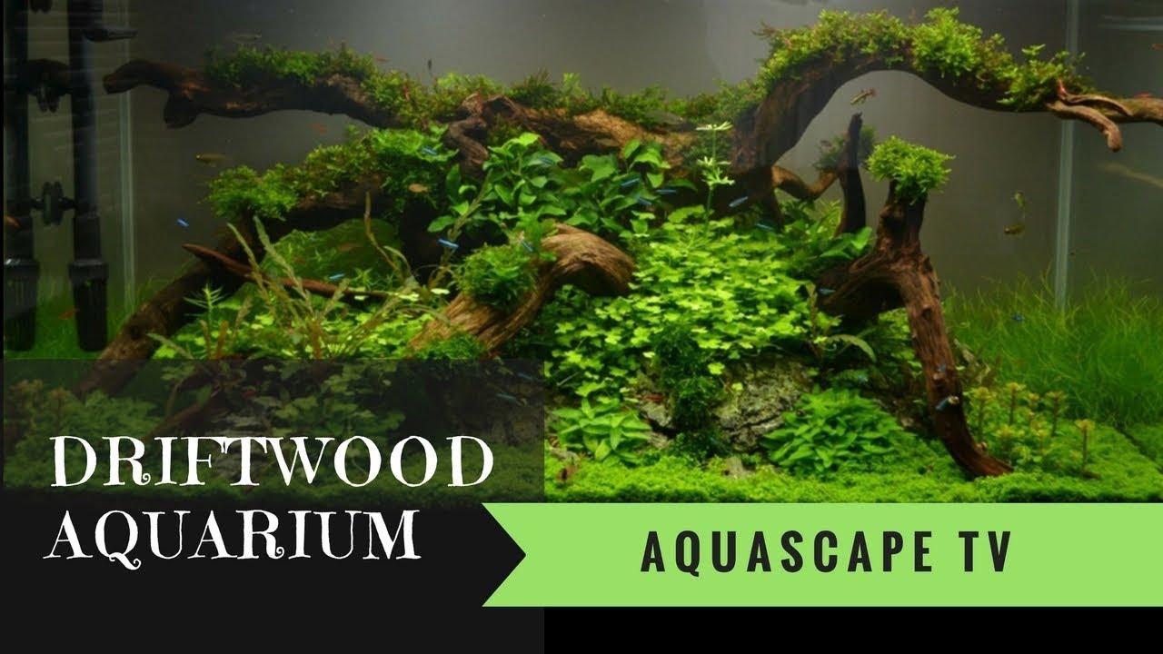 driftwood aquarium design 2018 aquascape tv youtube