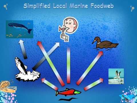 Forage Fish - A Presentation