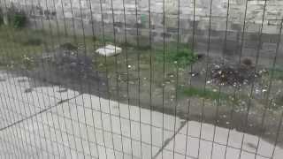 Сетка сварная Euro Fence для заборов в рулонах(http://metizy-94.com.ua/home/zabor_svarnoy_setki.html здесь страница с описанием сварной сетки Euro Fence для заборов, которую Вы видите..., 2013-09-17T14:12:24.000Z)