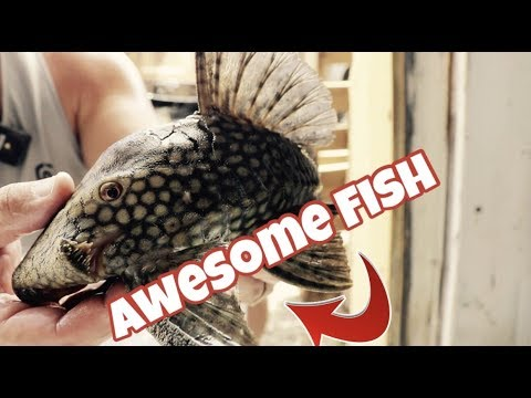 EXOTIC FRESHWATER FISHES FROM SOUTH AMERICA *UNBOXING Part 2