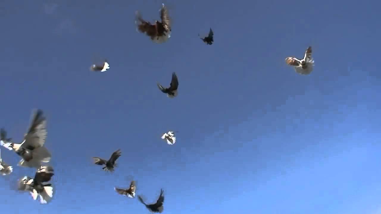 Летите голуби - YouTube