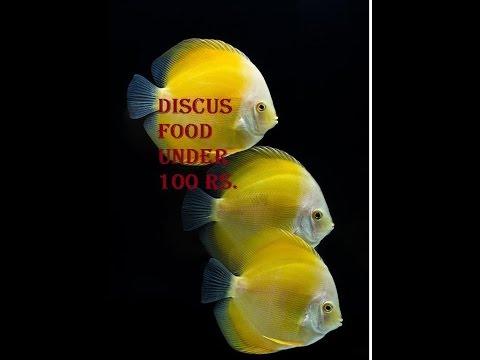 Diy discus beef heart mix doovi for Discus fish food