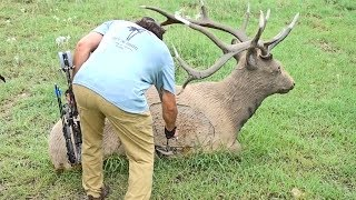 Shooting Realistic 3D Animals | ARCHERY CHALLENGE COURSE