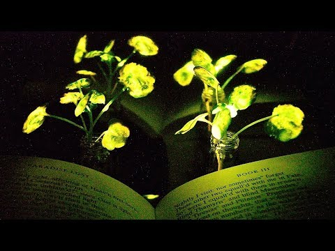 Glowing Plants Youtube