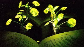 Glowing plants provide light to read