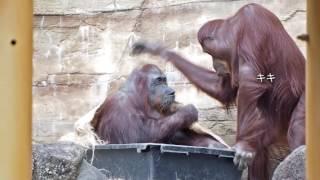 多摩動物公園 2016年10月11日.