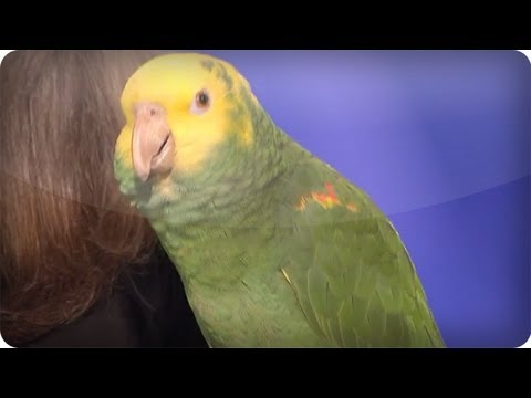 Echo the talking bird from Animal Gardens - America's Got Talent  Audition - Season 6