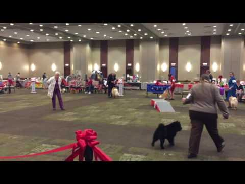 2017 Chow Chow National