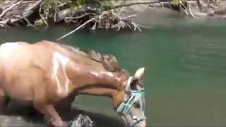 Sexy Girls Bathing a Horse Intelligent Technology Smart Farming Automatic Sheep Shoeing and Cleaning