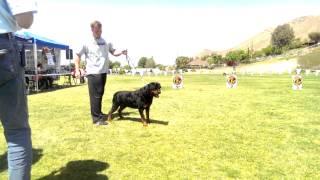 Rex Von Ruelmann 2015 Rkna Breed Show South Coast Rottweiler Club.