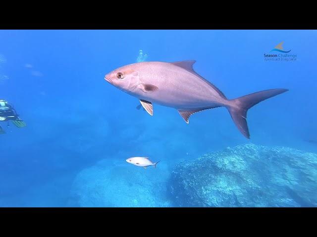 Off Shore Diving Formigas_Dollabarat