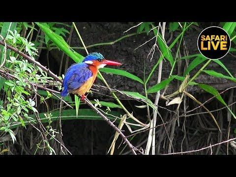 safariLIVE - Sunrise Safari - February 21, 2019
