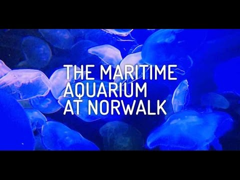 Tour of The Maritime Aquarium at Norwalk