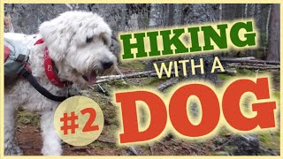 #2- WHAT TO EXPECT WHEN HIKING WITH A DOG ON THE APPALACHIAN TRAIL