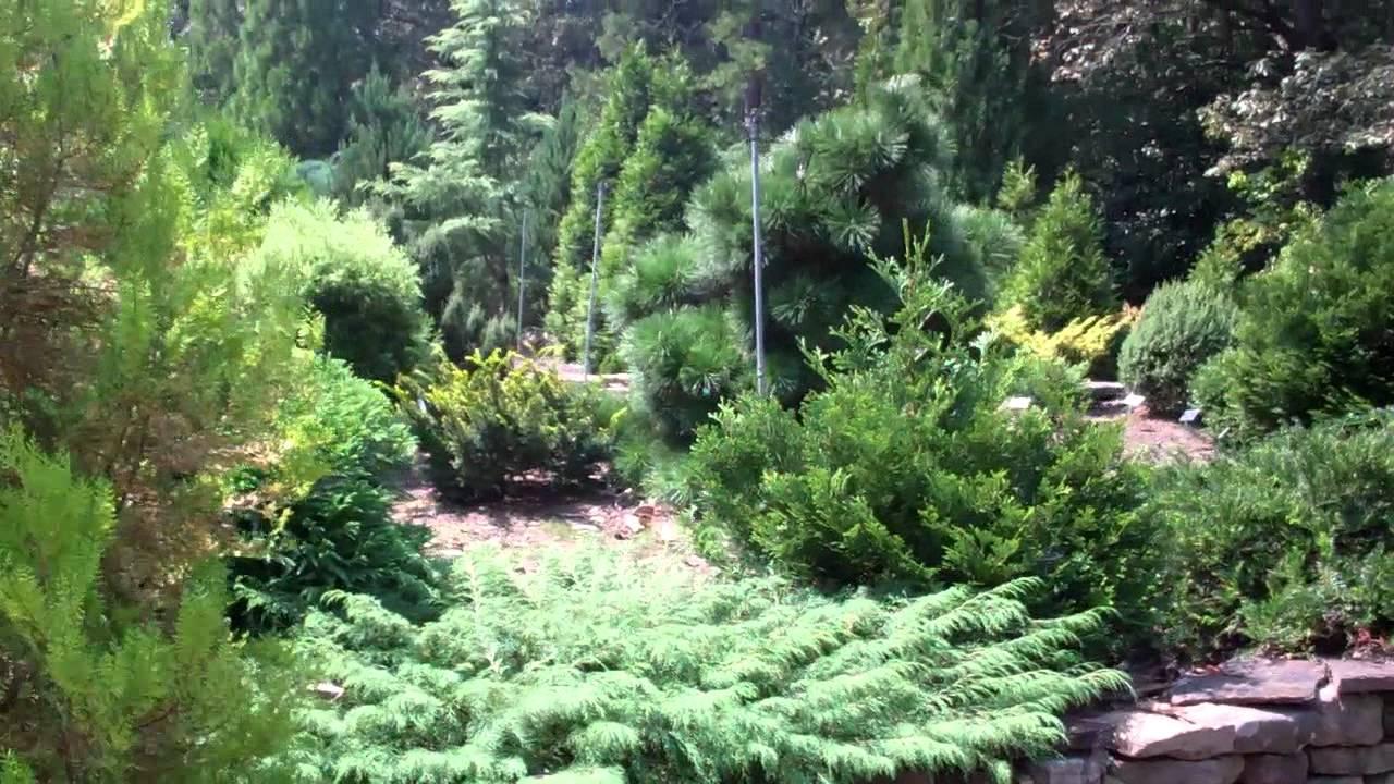 Conifer Garden At Smith Gilbert Gardens In Kennesaw