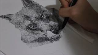 Wolf Pointillism Drawing