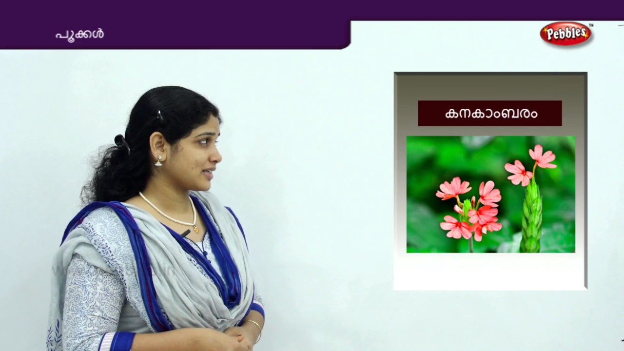 Learn Flowers Names In Malayalam Pookkal Preschool Educational Videos For Toddlers Youtube