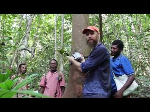 Deploying Acoustic Recorders in Papua New Guinea