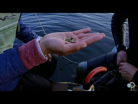 The Most Gold | Bering Sea Gold