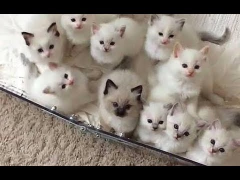 WOW - The Best Cute Funny Kittens Cats Videos Compilation. Enjoy the Meowing and Playing #36